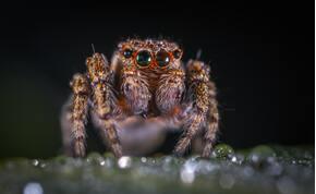 Csengett a nő füle: kiderült, hogy egy pók lakik benne – videó