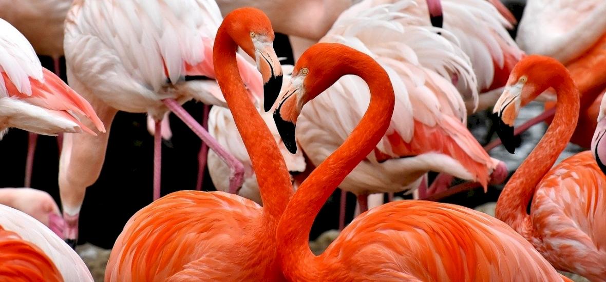 Kutatók meglepő felfedezése: egy hatalmas hasonlóság az emberek és a flamingók között