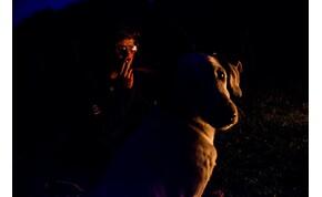 Ha cigizel, a kutyád kétszer nagyobb eséllyel lesz rákos!