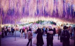 Földöntúli gyönyörűség: a 144 éves fa rózsaszínné változtatja az égboltot – videó