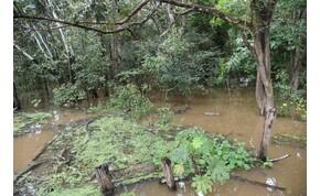 Találkozásom az amazonasi tűzhangyákkal – galéria