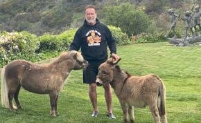 Elképesztő dolgot csinált Arnold Schwarzenegger a szamarával