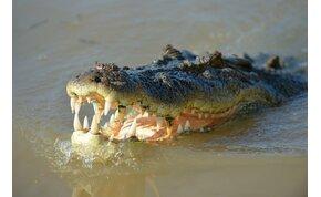 A krokodilok ősei két lábon járó gyilkos terminátorok voltak – videó