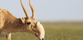 Hirtelen összeesett és megfulladt több százezer állat az éghajlatváltozás miatt