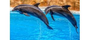 A delfinek tudnak beszélni, még emberi nyelven is – videó