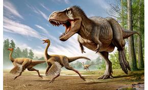 Japánban találtak rá a világ legkisebb dinoszaurusztojására