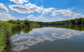 Hogyan jelenhet meg új halfaj a kerti tóban? Magyar kutatók oldották meg a rejtélyt