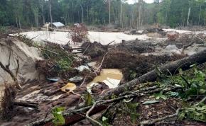 Az aranybányászat jelentősen korlátozza Amazónia erdőinek megújulóképességét