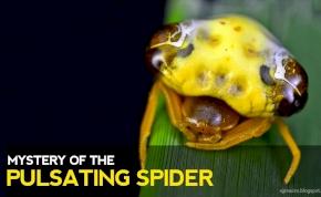 Szerinted pók vagy kígyó van a képen? A legtöbben nem tudják a választ
