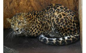 Veszélyeztetett faj egyede érkezett a debreceni állatkertbe