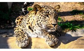 Különleges programokkal készül a 60 éves Pécsi Állatkert