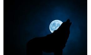 Miért ugatják a kutyák a Holdat?