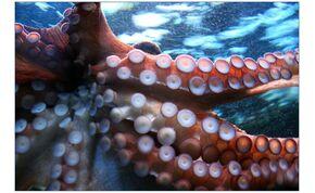 Azt hitték, hogy koszos a polip akváriuma, pedig abban tízezer kispolip úszkált – videó