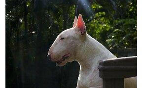 A világ hét legcsúnyább kutyája – videó