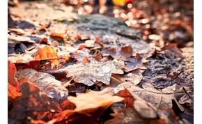 Beköszönt az ősz, jön a lehűlés és a csapadék – ez várható