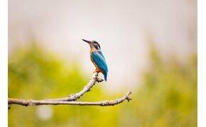 Láttad már a csodálatos magyar kolibrimadarat, amely lebeg a víz felett?