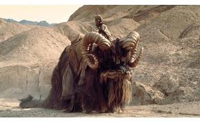 A buckalakók mire használták a hatalmas elefántszerű lényeiket, a banthákat?