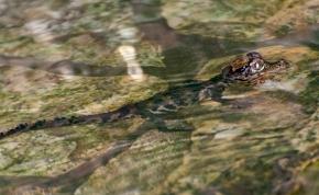 Bobó és Barbi igazi mintaszülőként nevelik a tompaorrú krokodilkölyköket
