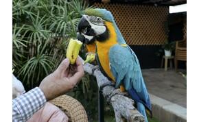 Egy hatalmas papagáj miatt szakadt félbe a meccs – videó