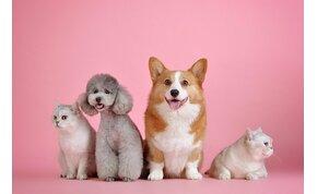 A tudomány kimondta: ha cuki állatokról nézel videókat, boldogabb leszel – próbáld ki!