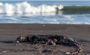 Mérgező anyag pusztított Kamcsatkánál, a vízi élővilág szinte teljesen kipusztult