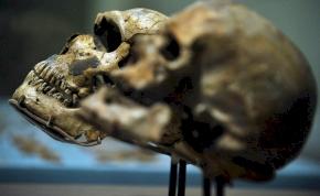Itt egy elmélet arról, hogy mi okozhatta a korai emberfajok vesztét