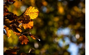 Szebbik arcát mutatja az ősz – szerdai időjárás