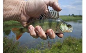 Kvíz: mennyire ismered a magyarországi halfajtákat? Ebből a kvízből sokat tanulhatsz