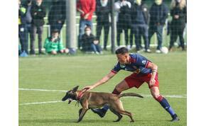 Egy kutya is pályára lépett a Vidi kupameccsén – videó