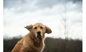Száz kilométert tett meg egy kutya, hogy megtalálja gazdáit