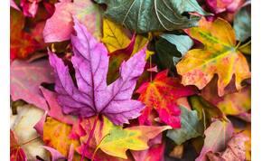 Kvíz: tényleg november eredetileg a 9. hónap volt a naptárban? Ebből a kvízből kiderül