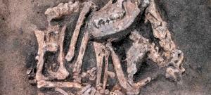 Kőkorszaki kutyafajtát fedeztek fel Svédországban egy ásatáson