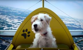 Repülő kutyák, akik Zoom-on chatelnek – Megérkezett a Microsoft ünnepi reklámfilmje