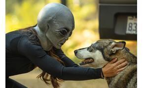 UFO-teszt: 8 kérdés alapján eldől, hogy mennyire hiszel a földönkívüliekben! Bevállalod az igazságot?