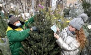 Milyen fenyőfát érdemes választani karácsonyra?
