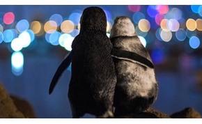 Két pingvin egymást ölelve nézi a fényeket – megható történet húzódik a háttérben