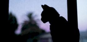 Brutális balszerencse, ha fekete macska megy át előtted? Nem mindig! Nagy szerencsét is jelezhet, mondjuk, mikor