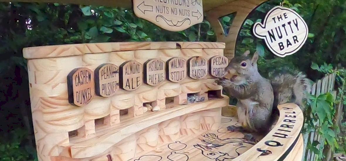 Ez a férfi éjszakai mulatót épített a mókusoknak