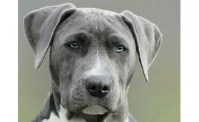 Okosító-kvíz: 10 különleges kutyafajta, felismered őket? Rengeteget tanulhatsz pár perc alatt