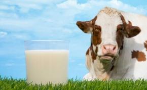 Újfajta tehéntej készül, aminek köze nincs a tehénhez – ki nem találnád, miből készül