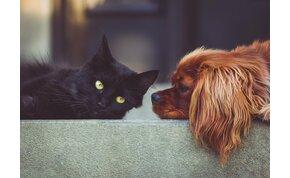 Kiderült, hogy megfertőzhetnek-e minket koronavírussal a háziállatok