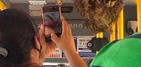 Magányos lajhár várt a forgalmas buszmegállóban, a sofőr adott neki egy fuvart