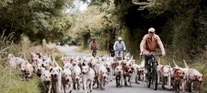 Kvíz: felismered mind a 9 magyar kutyafajtát? Ezzel a tudással mindenkit leveszel majd a lábáról