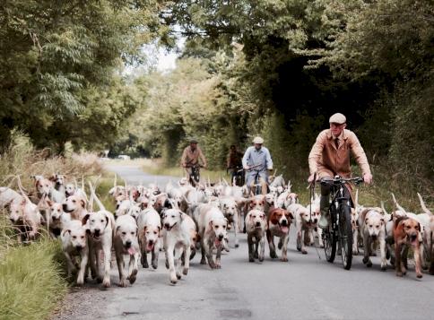 Kvíz: felismered mind a 9 magyar kutyafajtát? Ezzel a tudással mindenkit levehetsz a lábáról