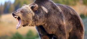 Medve kergetett meg egy síelőt Romániában – videó