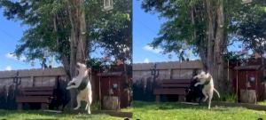 Ez az udvaron játszó kiskutya valószínűleg a legaranyosabb dolog, amit a mai napon látsz