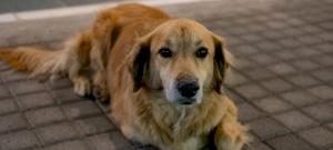 Ez a kutya csak arra vár, hogy megjöjjön a postás, ami ez után történik, azt látnod kell