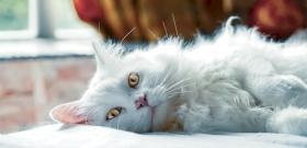 Ha a macskád mögé teszel egy uborkát, ő átváltozik rakétává, és meg sem áll a Holdig – videó