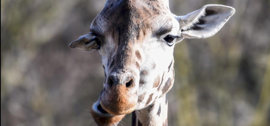 Egyre több pockot és zsiráfot ütnek el repülők
