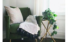A növények tényleg tisztítják a levegőt a lakásban?